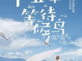 《十五年等待候鸟》360云盘百度云